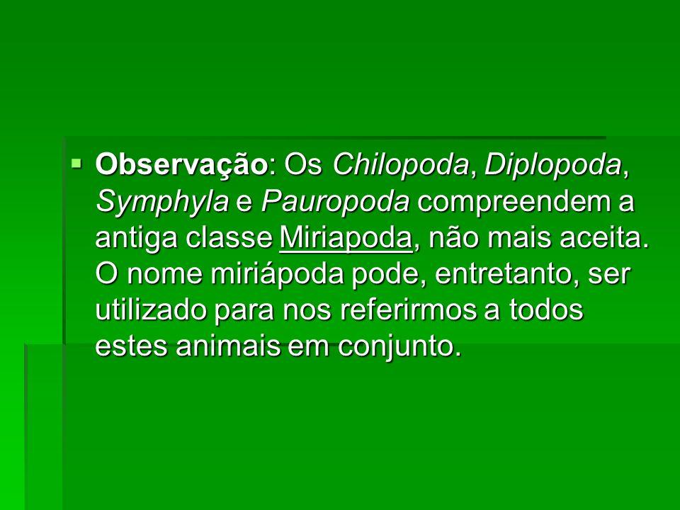 Observação: Os Chilopoda, Diplopoda, Symphyla e Pauropoda compreendem a antiga classe Miriapoda, não mais aceita. O nome miriápoda pode, entretanto, s