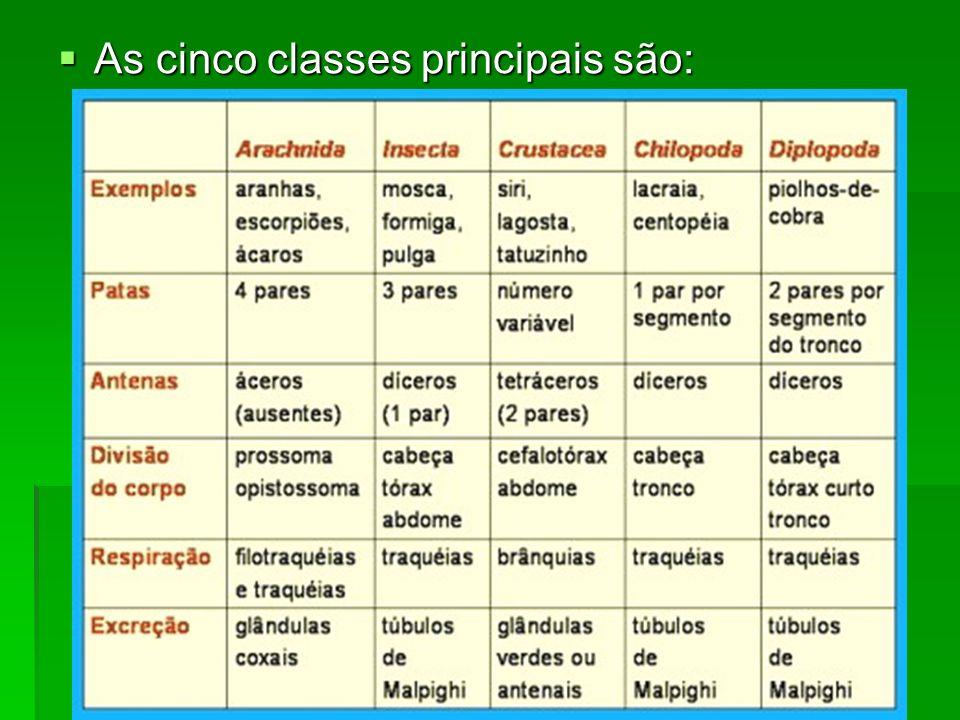 As cinco classes principais são: As cinco classes principais são: