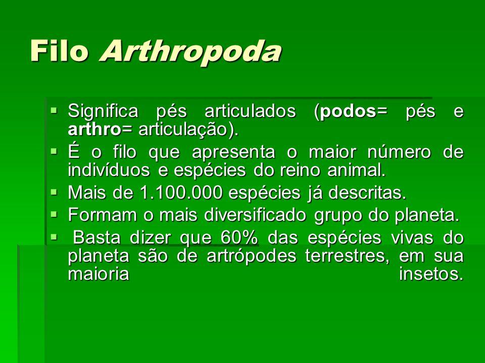 Filo Arthropoda Significa pés articulados (podos= pés e arthro= articulação). Significa pés articulados (podos= pés e arthro= articulação). É o filo q