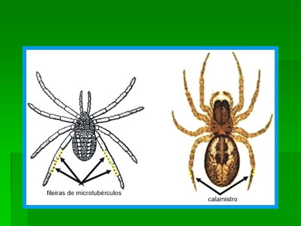 Morfologia da classe Insecta