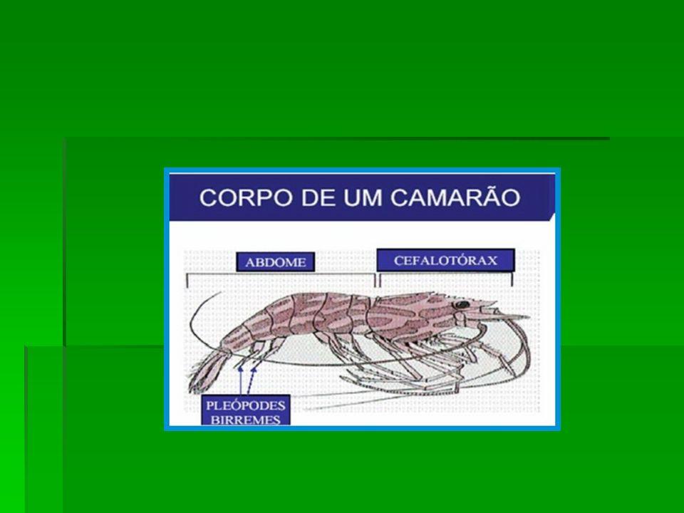 Os Crustáceos Os Crustáceos A grande classe dos crustáceos possuem espécies especialmente aquáticas, embora alguns vivam em terra úmida, como é o caso dos tatuzinhos de jardim.