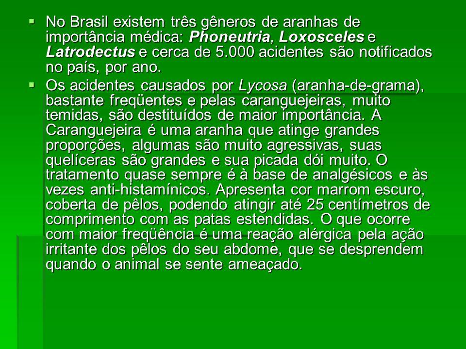 No Brasil existem três gêneros de aranhas de importância médica: Phoneutria, Loxosceles e Latrodectus e cerca de 5.000 acidentes são notificados no pa