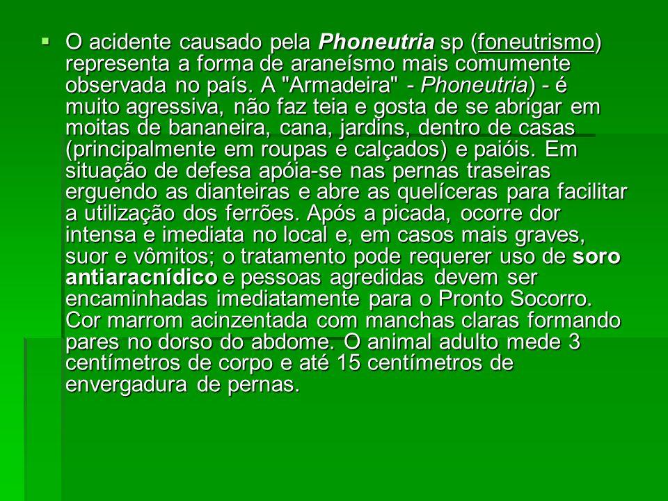O acidente causado pela Phoneutria sp (foneutrismo) representa a forma de araneísmo mais comumente observada no país. A