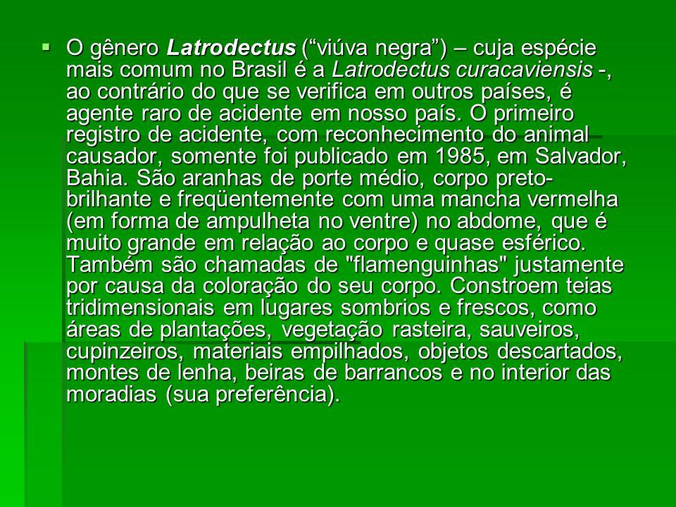 O gênero Latrodectus (viúva negra) – cuja espécie mais comum no Brasil é a Latrodectus curacaviensis -, ao contrário do que se verifica em outros país