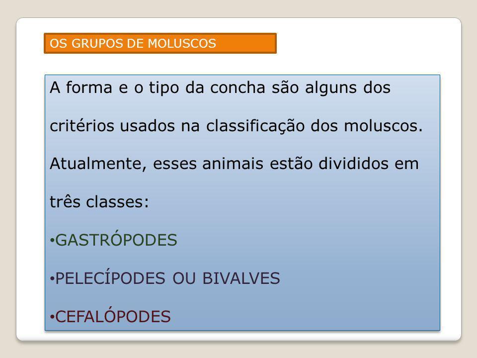 OS GRUPOS DE MOLUSCOS A forma e o tipo da concha são alguns dos critérios usados na classificação dos moluscos. Atualmente, esses animais estão dividi