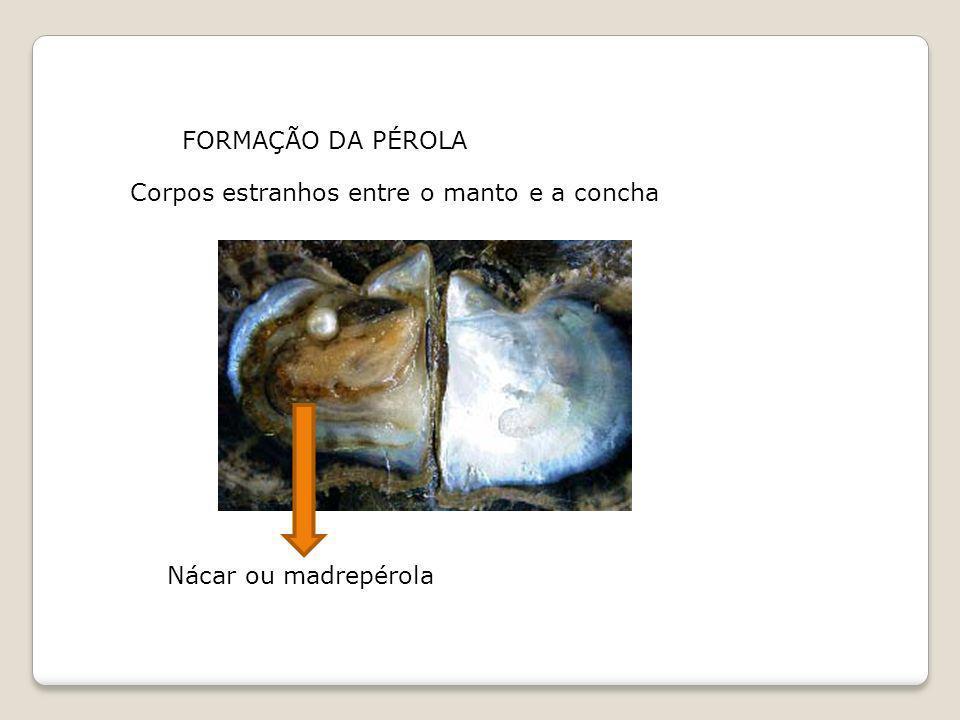 FORMAÇÃO DA PÉROLA Nácar ou madrepérola Corpos estranhos entre o manto e a concha