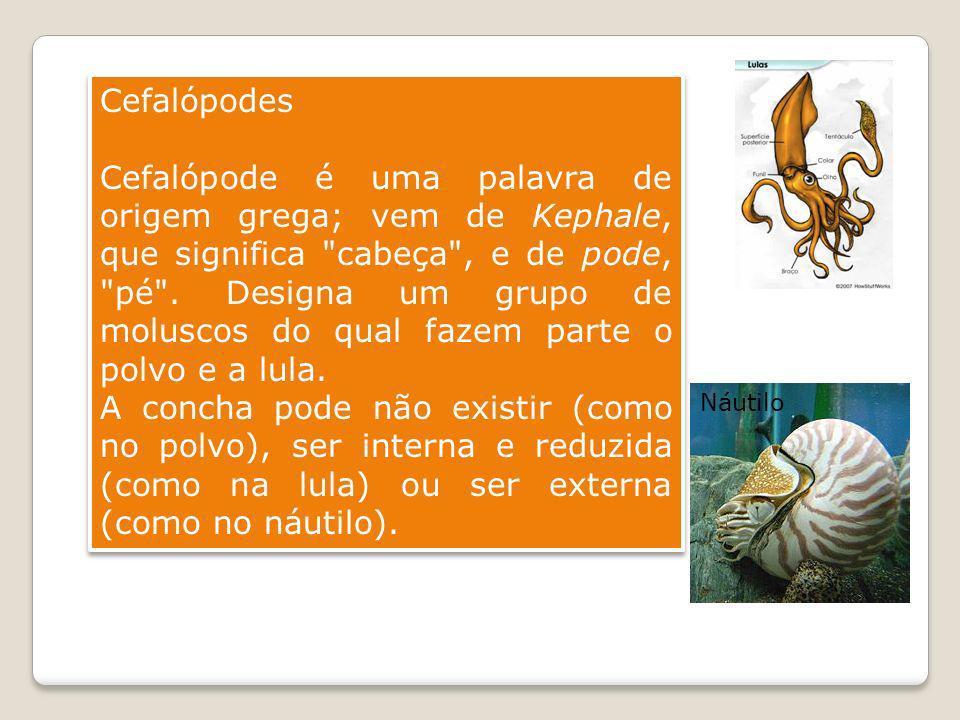 Cefalópodes Cefalópode é uma palavra de origem grega; vem de Kephale, que significa