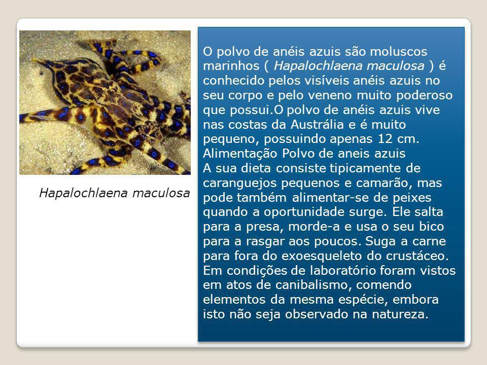 O polvo de anéis azuis são moluscos marinhos ( Hapalochlaena maculosa ) é conhecido pelos visíveis anéis azuis no seu corpo e pelo veneno muito podero