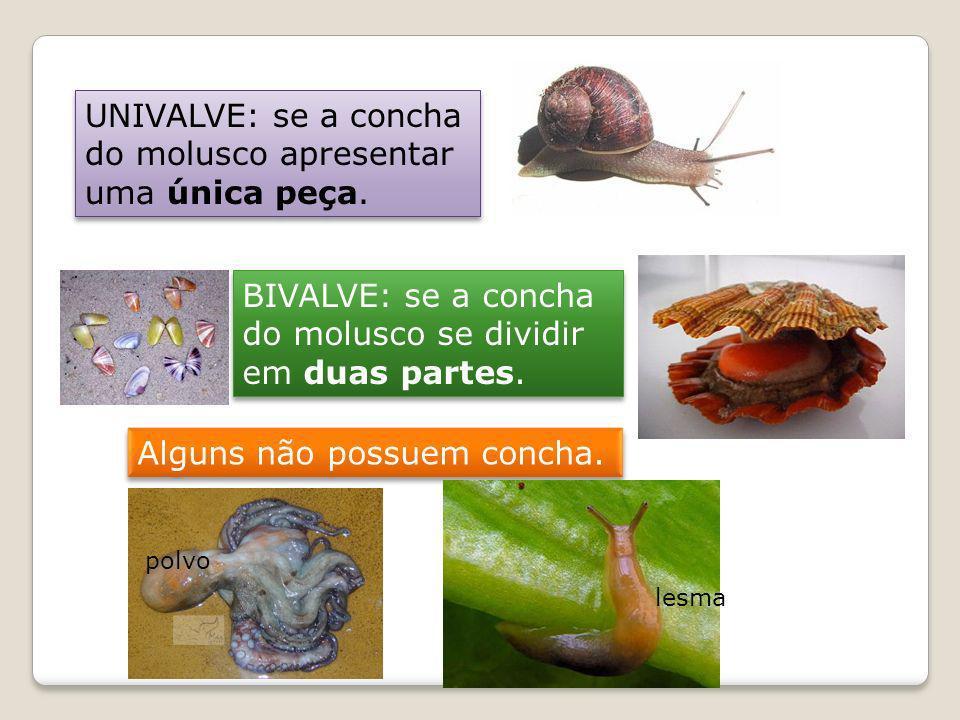 UNIVALVE: se a concha do molusco apresentar uma única peça. BIVALVE: se a concha do molusco se dividir em duas partes. Alguns não possuem concha. lesm