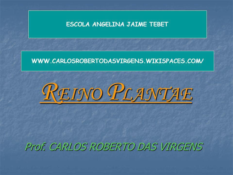 R EINO P LANTAE Prof. CARLOS ROBERTO DAS VIRGENS ESCOLA ANGELINA JAIME TEBET WWW.CARLOSROBERTODASVIRGENS.WIKISPACES.COM/