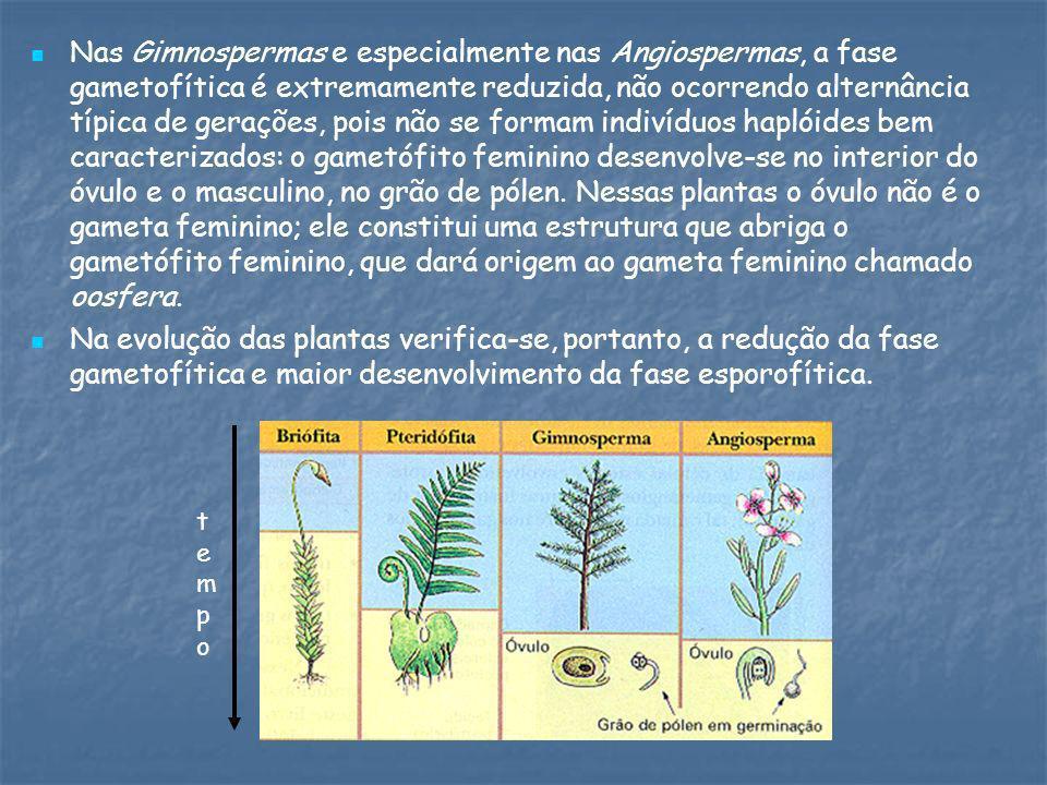 Nas Gimnospermas e especialmente nas Angiospermas, a fase gametofítica é extremamente reduzida, não ocorrendo alternância típica de gerações, pois não