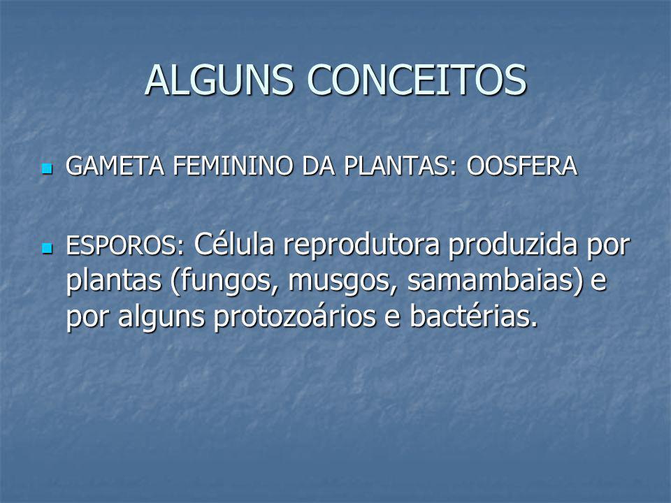 ALGUNS CONCEITOS GAMETA FEMININO DA PLANTAS: OOSFERA GAMETA FEMININO DA PLANTAS: OOSFERA ESPOROS: Célula reprodutora produzida por plantas (fungos, mu