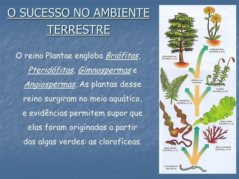 O SUCESSO NO AMBIENTE TERRESTRE O reino Plantae engloba Briófitas, Pteridófitas, Gimnospermas e Angiospermas. As plantas desse reino surgiram no meio