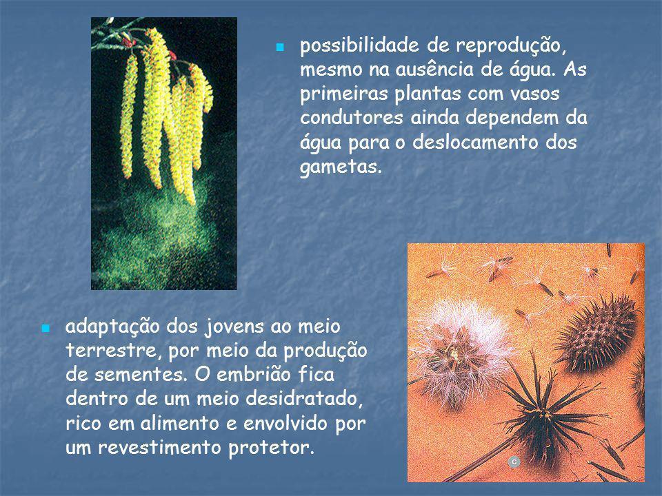 possibilidade de reprodução, mesmo na ausência de água. As primeiras plantas com vasos condutores ainda dependem da água para o deslocamento dos gamet