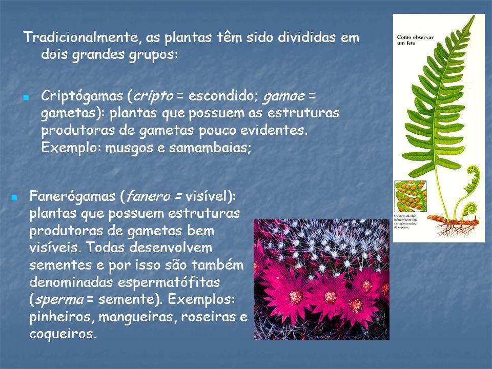 Tradicionalmente, as plantas têm sido divididas em dois grandes grupos: Criptógamas (cripto = escondido; gamae = gametas): plantas que possuem as estr