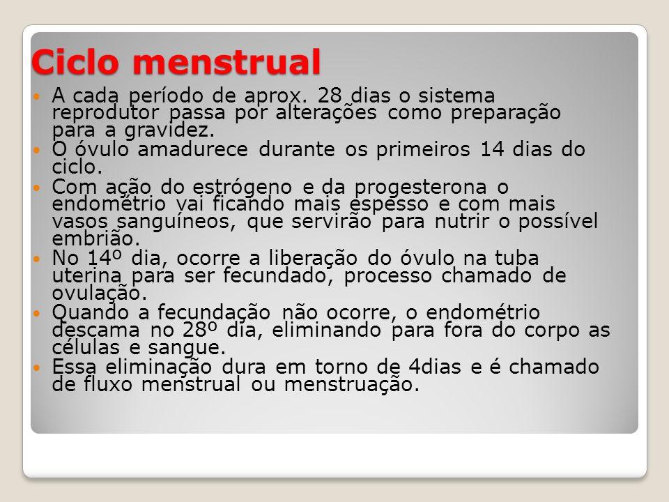 Ciclo menstrual A cada período de aprox. 28 dias o sistema reprodutor passa por alterações como preparação para a gravidez. O óvulo amadurece durante