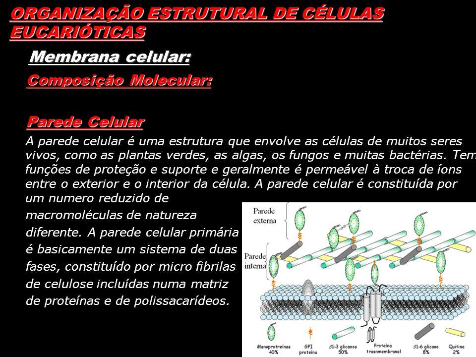 ORGANIZAÇÃO ESTRUTURAL DE CÉLULAS EUCARIÓTICAS Membrana celular: Composição Molecular: Parede Celular A parede celular é uma estrutura que envolve as