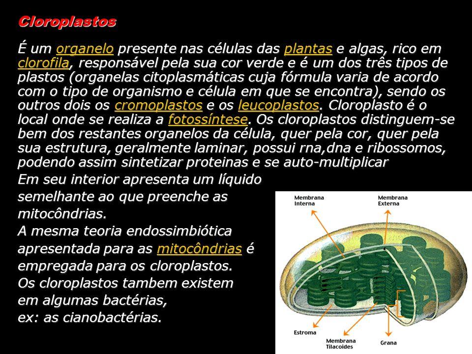 Cloroplastos É um organelo presente nas células das plantas e algas, rico em clorofila, responsável pela sua cor verde e é um dos três tipos de plasto