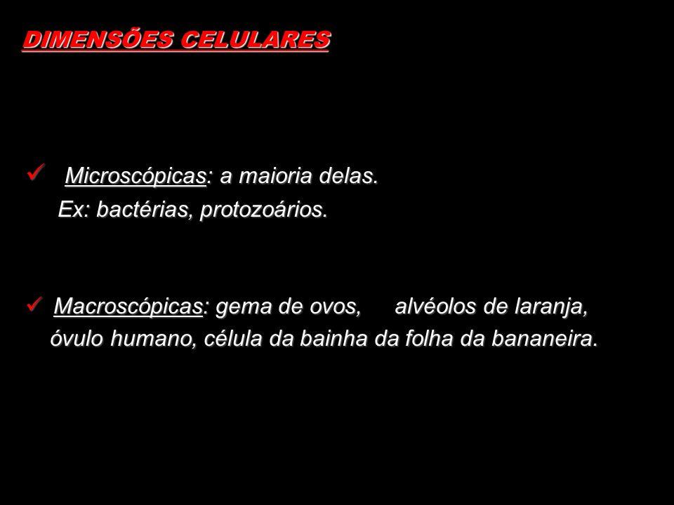 DIMENSÕES CELULARES Microscópicas: a maioria delas. Microscópicas: a maioria delas. Ex: bactérias, protozoários. Macroscópicas: gema de ovos, alvéolos