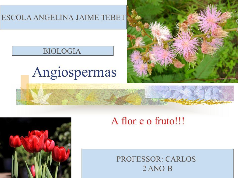Angiospermas A flor e o fruto!!! ESCOLA ANGELINA JAIME TEBET PROFESSOR: CARLOS 2 ANO B BIOLOGIA