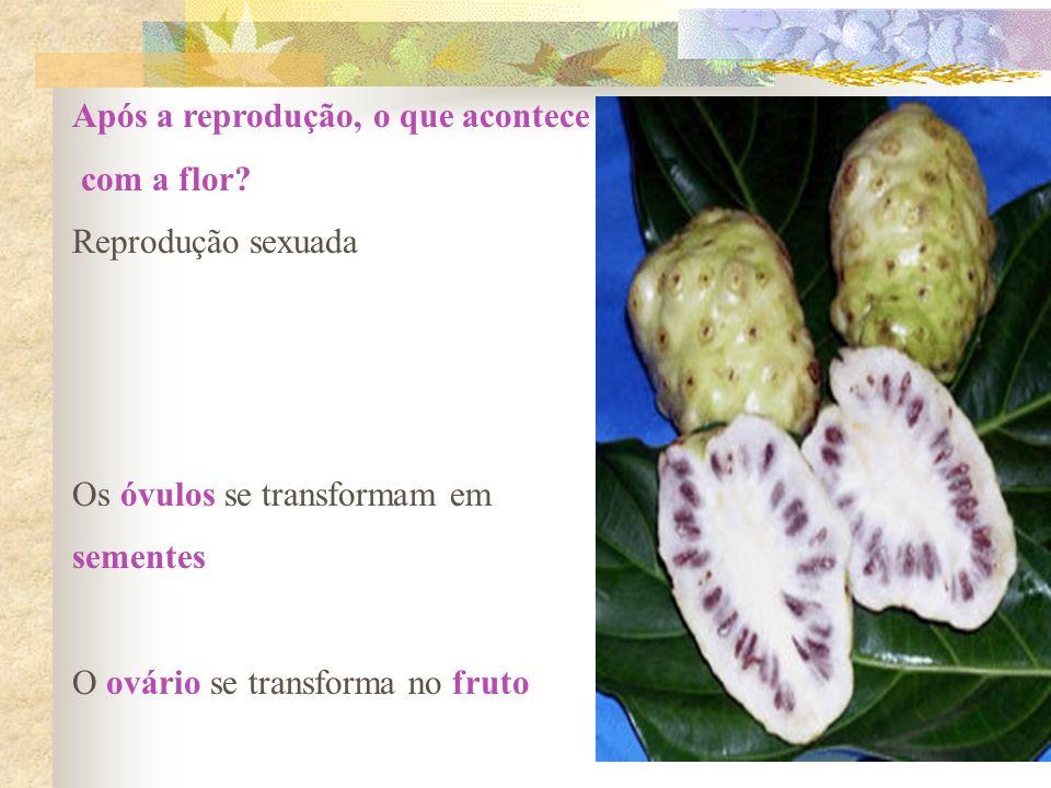 Após a reprodução, o que acontece com a flor? Reprodução sexuada Os óvulos se transformam em sementes O ovário se transforma no fruto