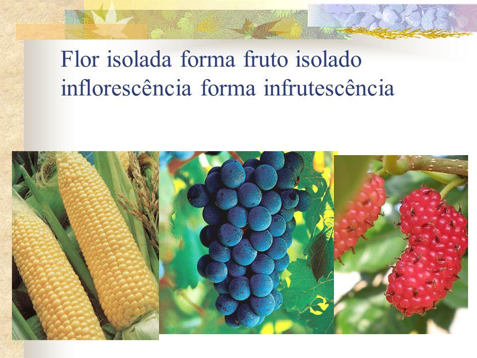 Flor isolada forma fruto isolado inflorescência forma infrutescência