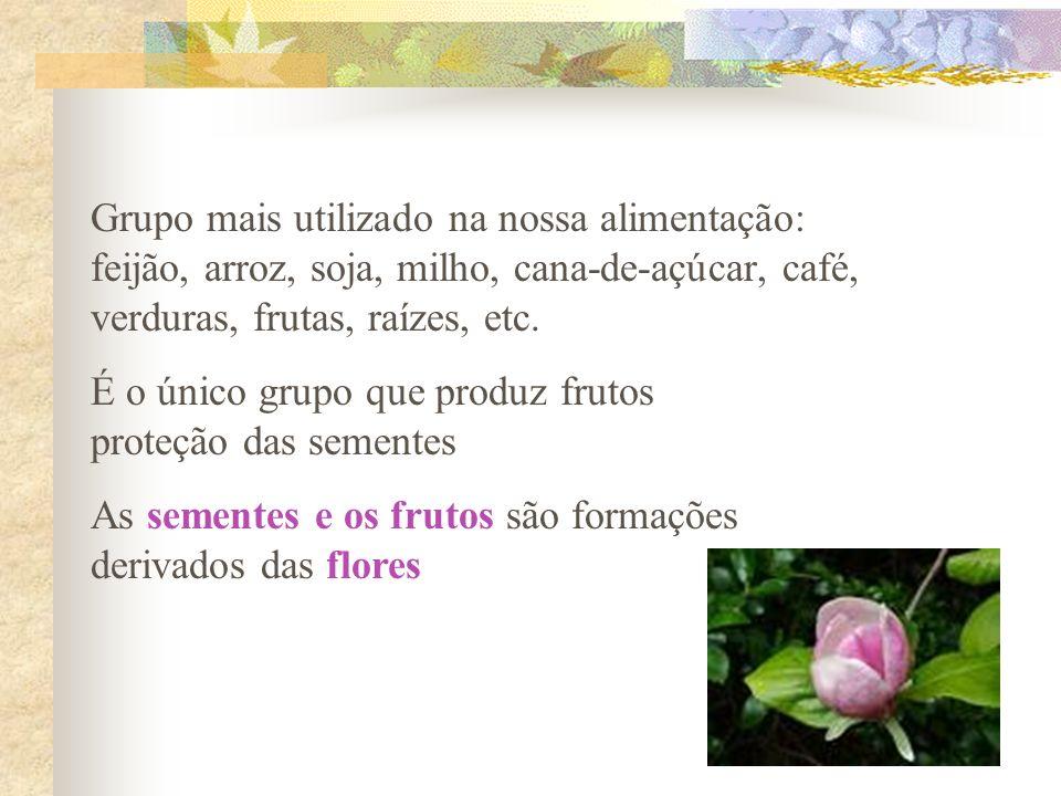 Grupo mais utilizado na nossa alimentação: feijão, arroz, soja, milho, cana-de-açúcar, café, verduras, frutas, raízes, etc. É o único grupo que produz
