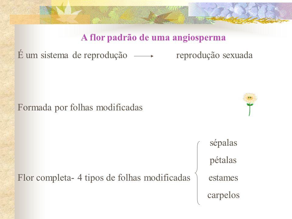 A flor padrão de uma angiosperma É um sistema de reprodução reprodução sexuada Formada por folhas modificadas sépalas pétalas Flor completa- 4 tipos d