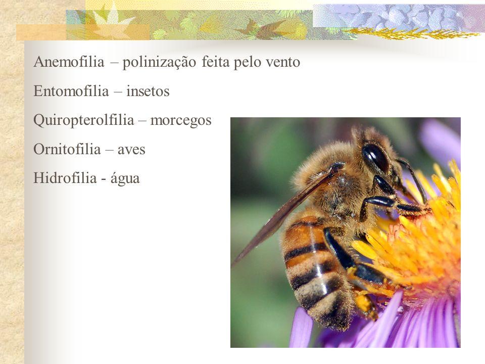Anemofilia – polinização feita pelo vento Entomofilia – insetos Quiropterolfilia – morcegos Ornitofilia – aves Hidrofilia - água