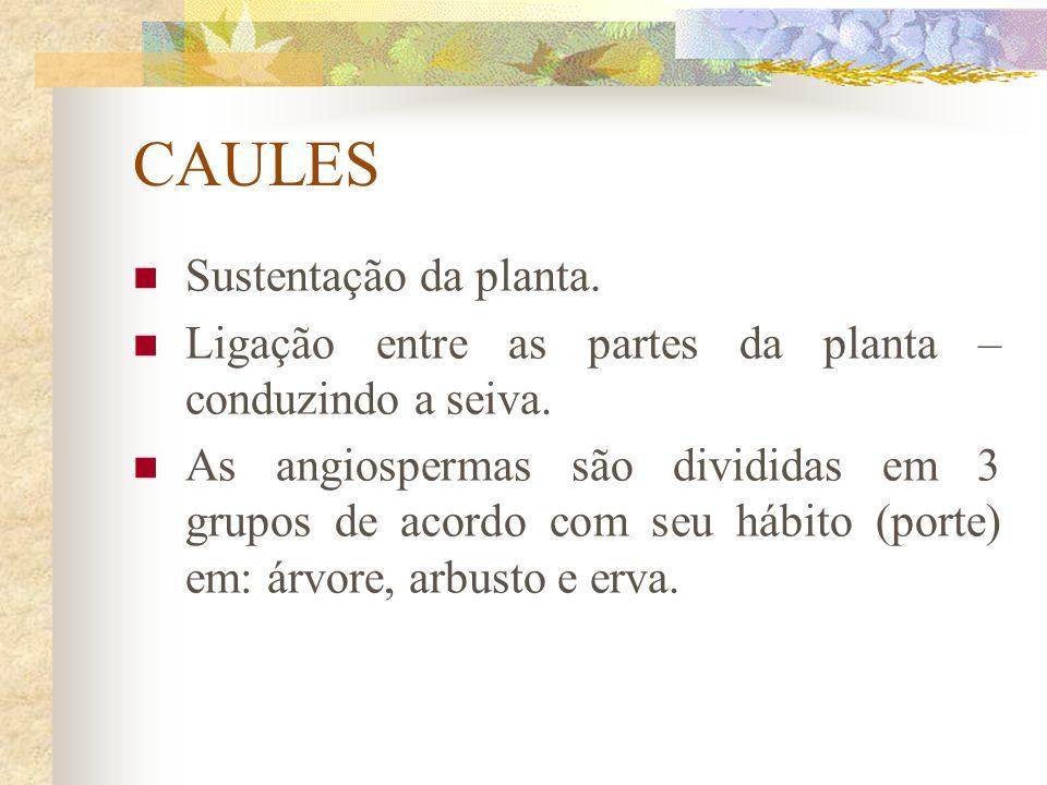 CAULES Sustentação da planta. Ligação entre as partes da planta – conduzindo a seiva. As angiospermas são divididas em 3 grupos de acordo com seu hábi