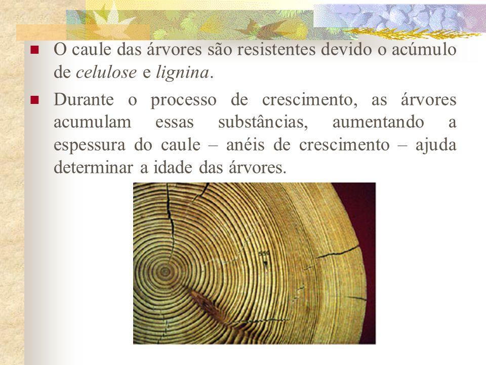 O caule das árvores são resistentes devido o acúmulo de celulose e lignina. Durante o processo de crescimento, as árvores acumulam essas substâncias,