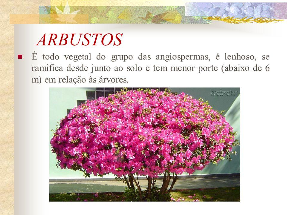 ARBUSTOS É todo vegetal do grupo das angiospermas, é lenhoso, se ramifica desde junto ao solo e tem menor porte (abaixo de 6 m) em relação às árvores.