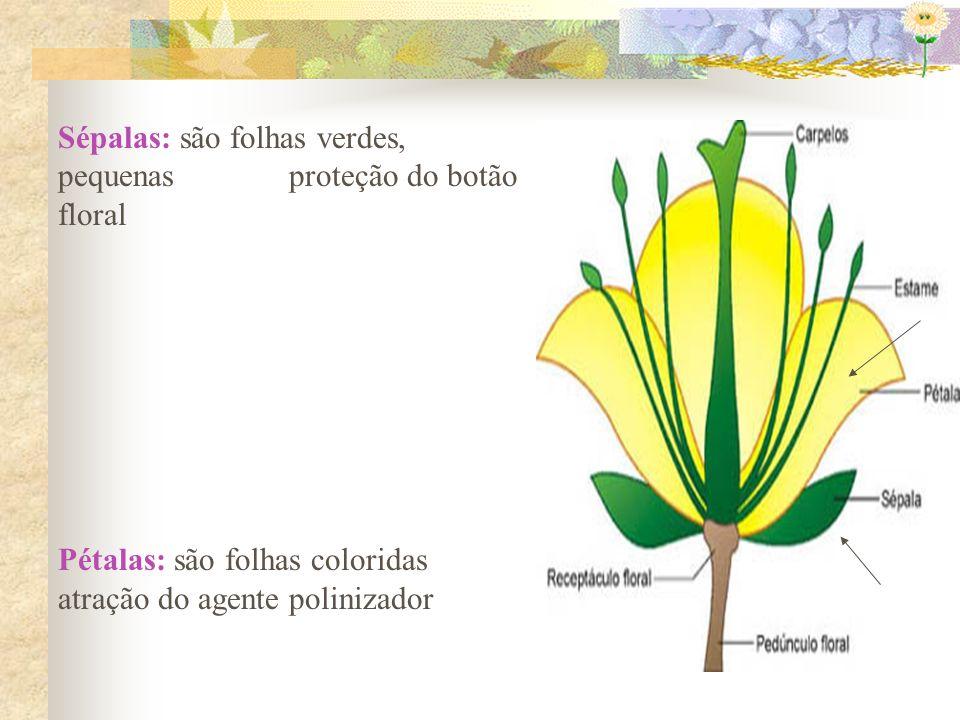 b) Frutos partenocárpicos Frutos dentro dos quais não se formam sementes.