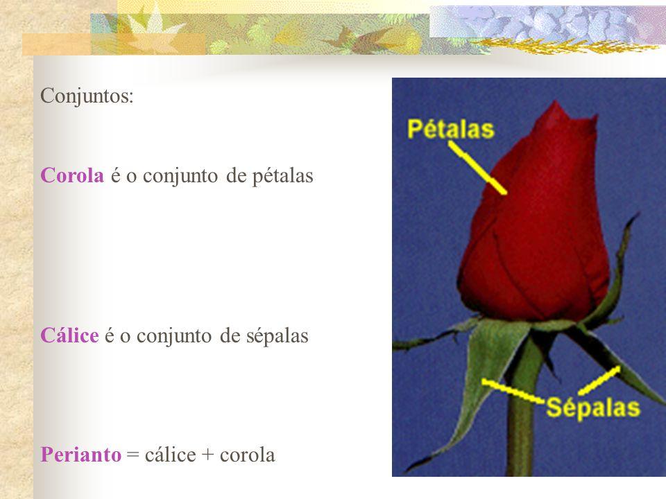 Conjuntos: Corola é o conjunto de pétalas Cálice é o conjunto de sépalas Perianto = cálice + corola