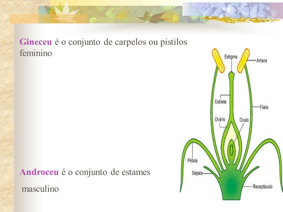 Gineceu é o conjunto de carpelos ou pistilos feminino Androceu é o conjunto de estames masculino