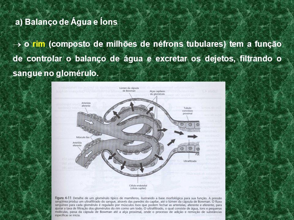 a) Balanço de Água e Íons o rim (composto de milhões de néfrons tubulares) tem a função de controlar o balanço de água e excretar os dejetos, filtrand