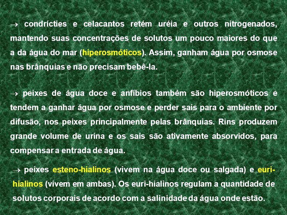 peixes esteno-hialinos (vivem na água doce ou salgada) e euri- hialinos (vivem em ambas). Os euri-hialinos regulam a quantidade de solutos corporais d