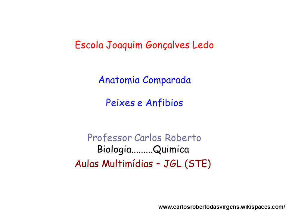 Escola Joaquim Gonçalves Ledo Anatomia Comparada Peixes e Anfibios Professor Carlos Roberto Biologia.........Quimica Aulas Multimídias – JGL (STE) www