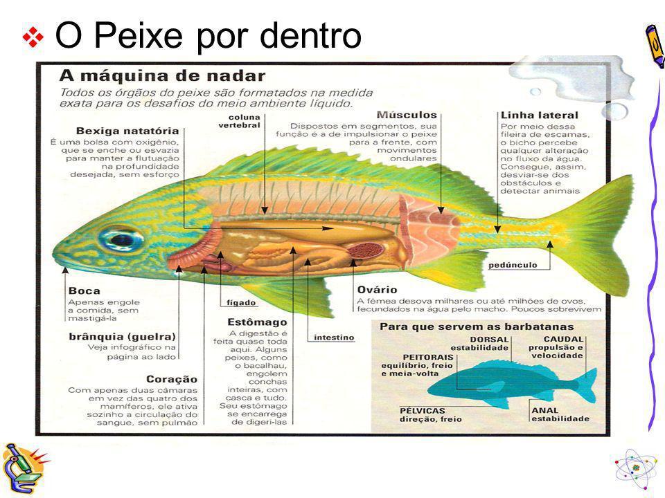 O Peixe por dentro