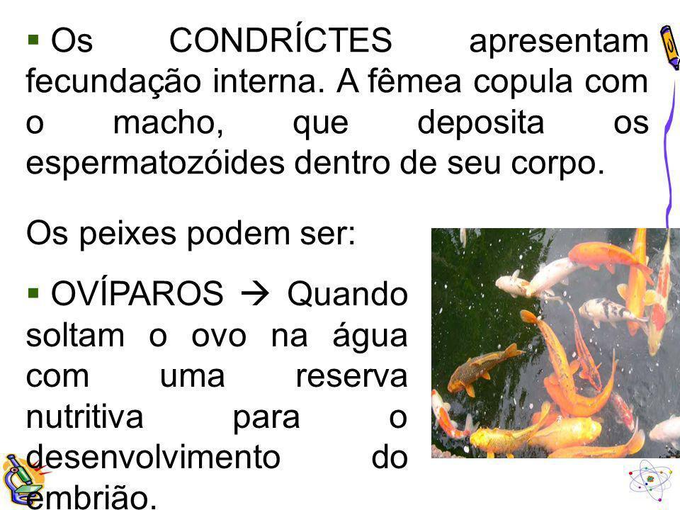 Os CONDRÍCTES apresentam fecundação interna. A fêmea copula com o macho, que deposita os espermatozóides dentro de seu corpo. Os peixes podem ser: OVÍ