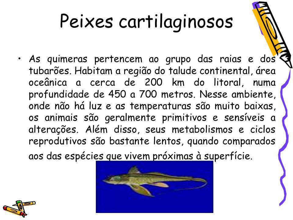 Peixes cartilaginosos As quimeras pertencem ao grupo das raias e dos tubarões. Habitam a região do talude continental, área oceânica a cerca de 200 km