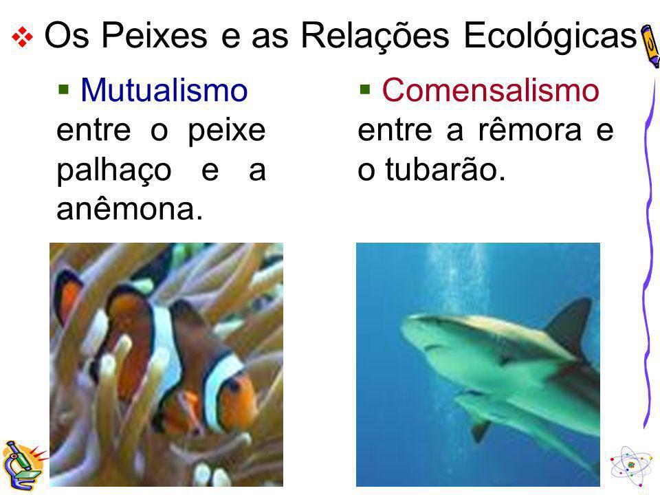 Os Peixes e as Relações Ecológicas Mutualismo entre o peixe palhaço e a anêmona. Comensalismo entre a rêmora e o tubarão.