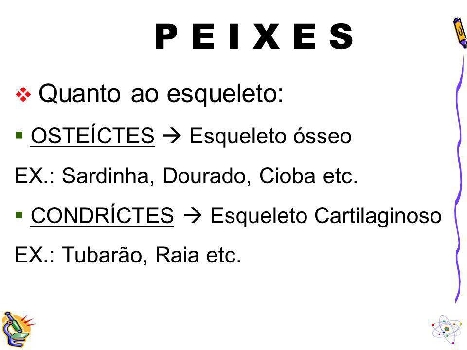 P E I X E S Quanto ao esqueleto: OSTEÍCTES Esqueleto ósseo EX.: Sardinha, Dourado, Cioba etc. CONDRÍCTES Esqueleto Cartilaginoso EX.: Tubarão, Raia et