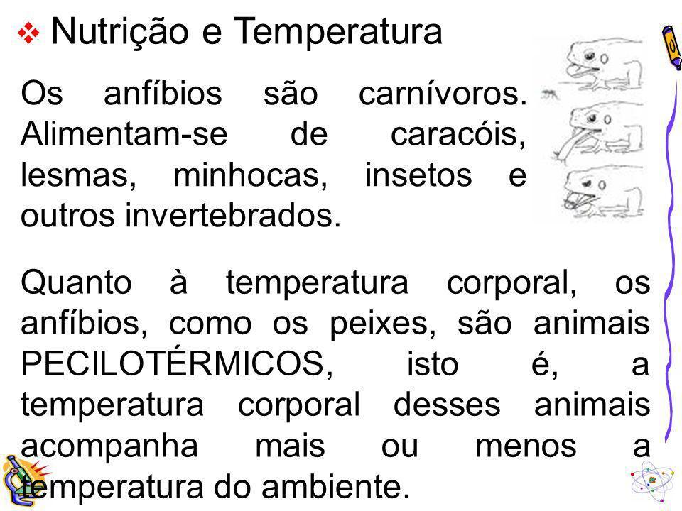 Nutrição e Temperatura Os anfíbios são carnívoros. Alimentam-se de caracóis, lesmas, minhocas, insetos e outros invertebrados. Quanto à temperatura co