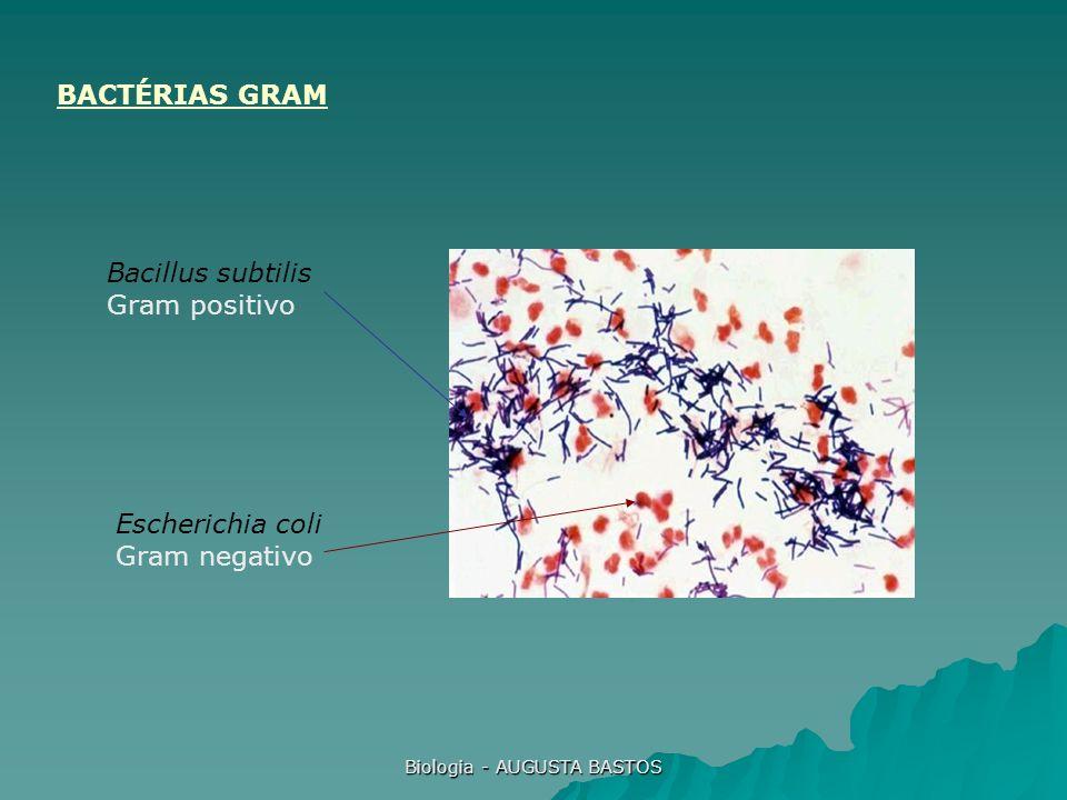 Biologia - AUGUSTA BASTOS Bacillus subtilis Gram positivo Escherichia coli Gram negativo BACTÉRIAS GRAM