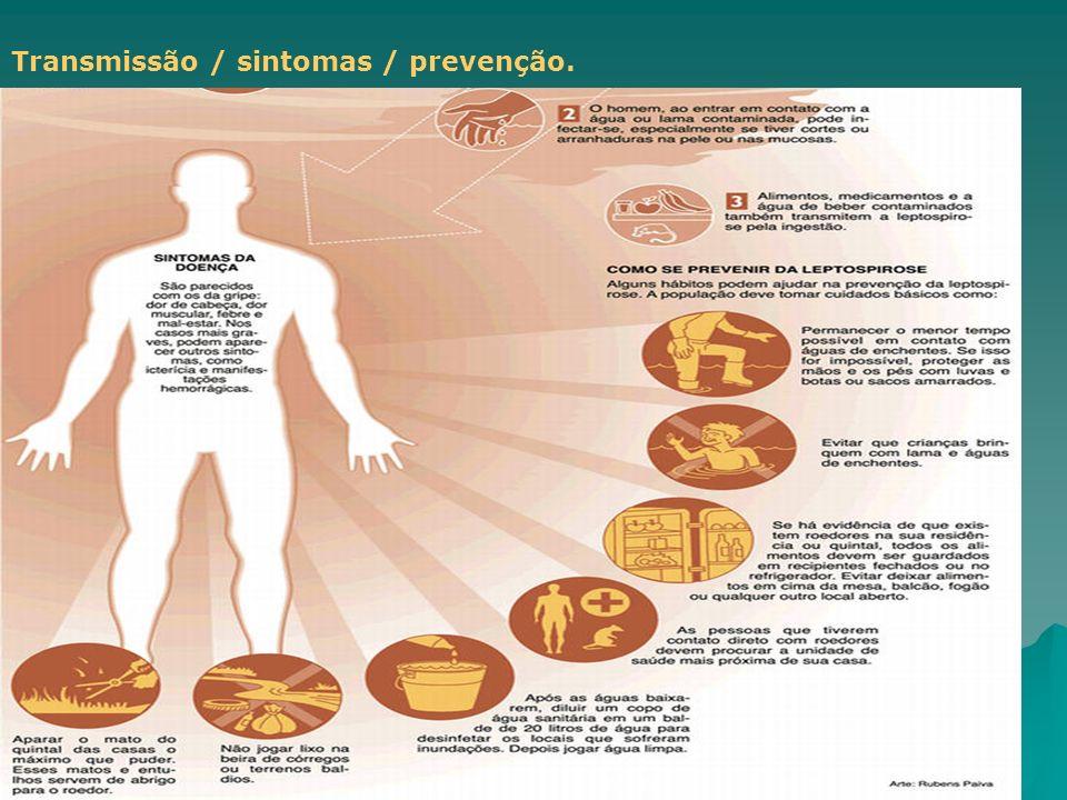 Biologia - AUGUSTA BASTOS Transmissão / sintomas / prevenção.