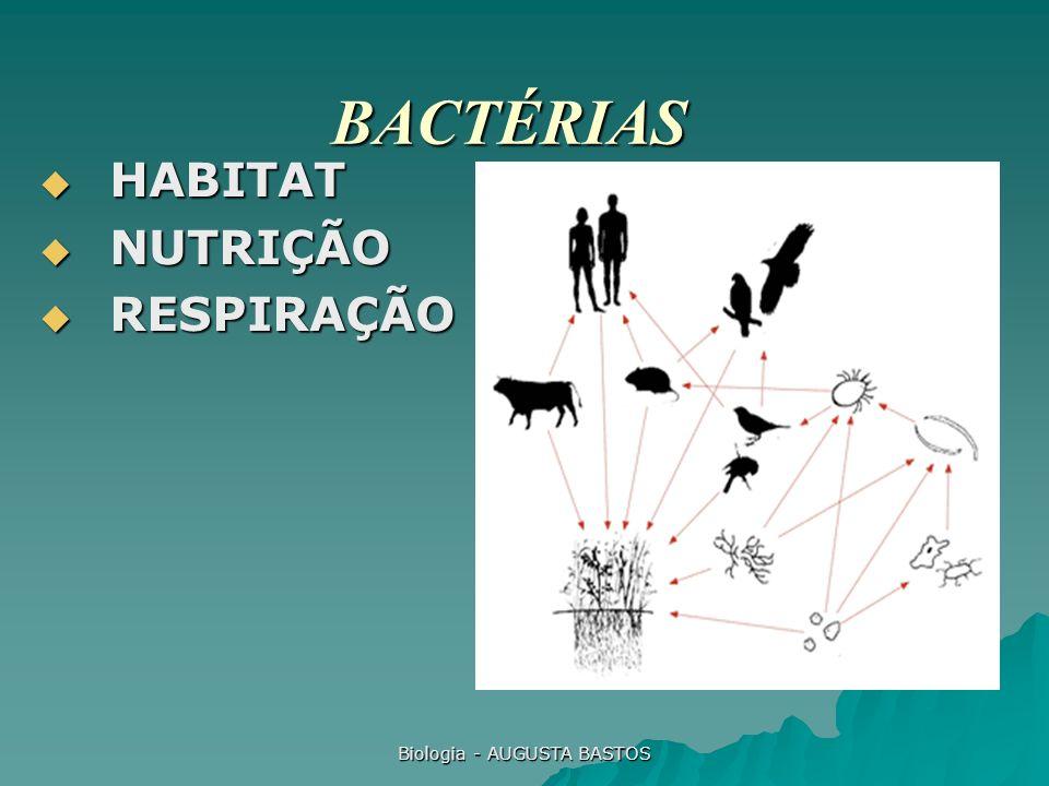 Biologia - AUGUSTA BASTOS BACTÉRIAS HABITAT HABITAT NUTRIÇÃO NUTRIÇÃO RESPIRAÇÃO RESPIRAÇÃO