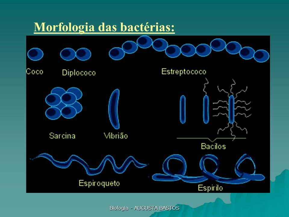 Biologia - AUGUSTA BASTOS Morfologia das bactérias: