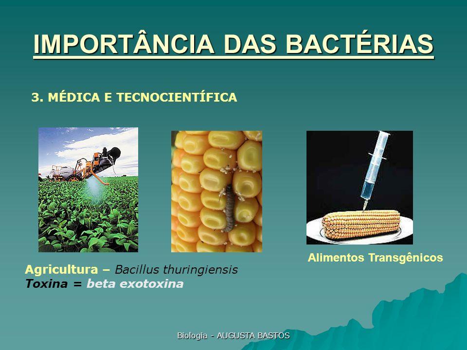 Biologia - AUGUSTA BASTOS IMPORTÂNCIA DAS BACTÉRIAS 3. MÉDICA E TECNOCIENTÍFICA Alimentos Transgênicos Agricultura – Bacillus thuringiensis Toxina = b