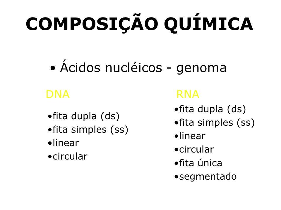 COMPOSIÇÃO QUÍMICA Ácidos nucléicos - genoma fita dupla (ds) fita simples (ss) linear circular fita dupla (ds) fita simples (ss) linear circular fita única segmentado DNARNA